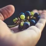 [소비자판례]어린이집서 과일 먹다 질식사...응급처치 못한 교사·어린이집 책임
