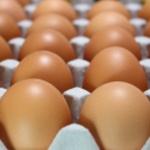 GMO 사료 먹고 자란 미국산 달걀 안전할까?...표기 없어 불안 커져