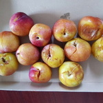 [오마이소비자] 배송보낸 과일 다 터졌는데 택배사 보상 '손사래'