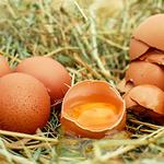 """대형마트 3사, 계란 판매 중단 """"국내 계란서도 살충제 성분 검출"""""""