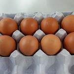 [살충제계란] 최종 부적합 농가 49곳...전체 계란 물량의 4.7%