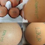 [살충제계란] 유통 계란서 '피프로닐 설폰' 검출...부적합 농가 8곳 추가