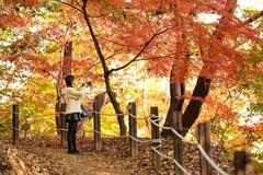 에버랜드 오색단풍 한창...이색 단풍 코스에서 가을 즐긴다