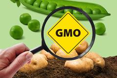 [식탁 위 GMO 숨바꼭질①] 소리없이 식탁 파고드는 GMO...1인당 섭취량 쌀과 맞먹어