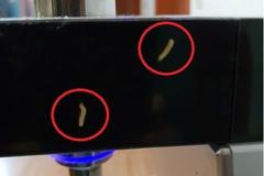 [노컷영상] 유명 브랜드 렌탈 정수기서 벌레가 꿈틀꿈틀