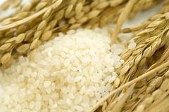 쌀 구매시 '가격' 최우선 고려...비용 상승 시 소비량 감소 전망