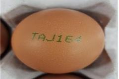 'TAJ164' 계란서 유해성분 검출...정부 전량 회수·폐기
