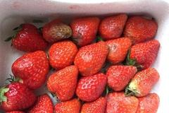 [노컷영상] 대형마트서 배송된 딸기, 누렇게 썩고 곰팡이 듬성듬성