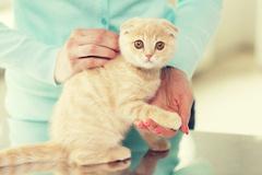 [지식카페] 분양 후 바로 폐사한 고양이, 치료비 등 보상될까?