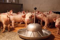 """대형마트 돼지고기 가격 인상 수순?...""""1주 비축분 소진되면 조정 불가피"""""""
